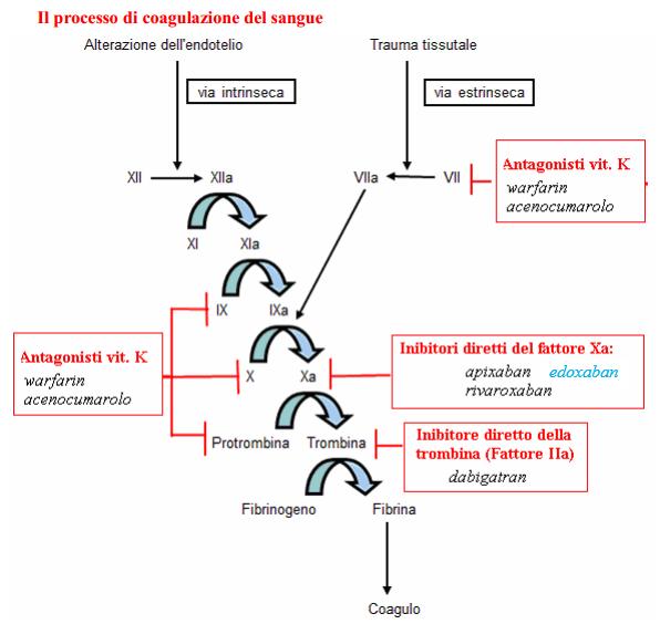 Target dei nuovi anticoagulanti orali rispetto al warfarin nella cascata della coagulazione